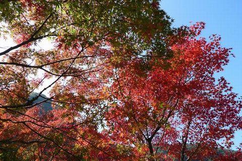 紅葉を見に耶馬渓へ